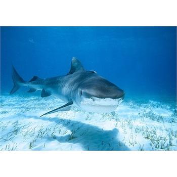 泰国 曼谷 暹罗海底世界门票 电子票