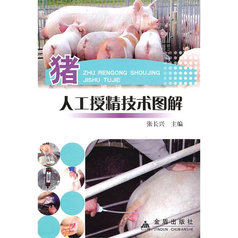猪人工授精技术图解