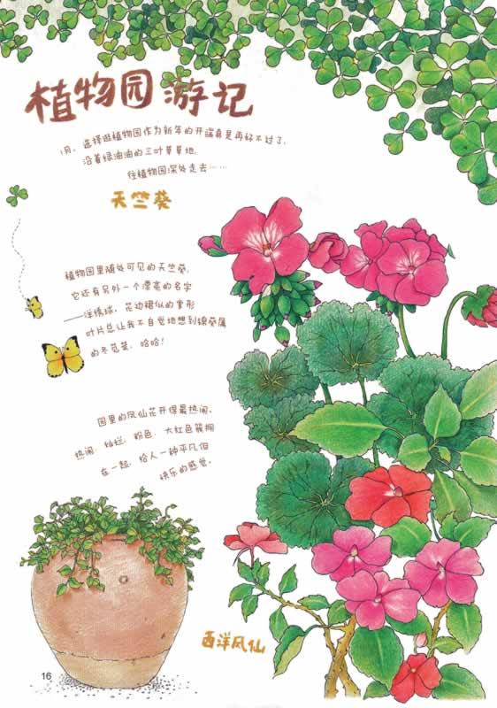 蜂蜜柚子茶手绘