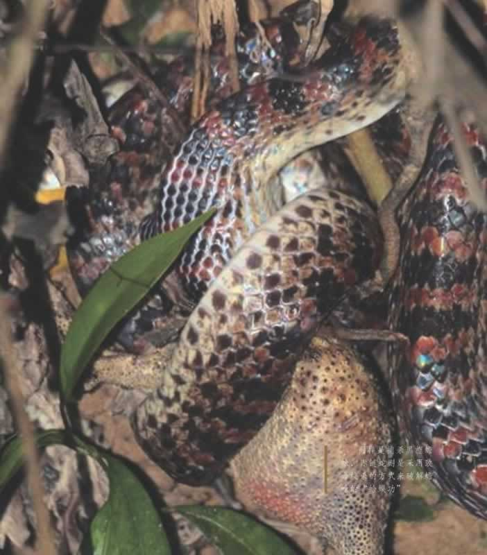 捕食过程,生长与繁殖特征等方面,向读者展示了一个超乎想象的动物世界