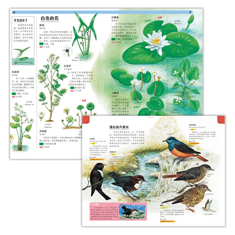 自然手册(全40册,来自法国米兰出版公司的超级畅销手绘少年儿童科普