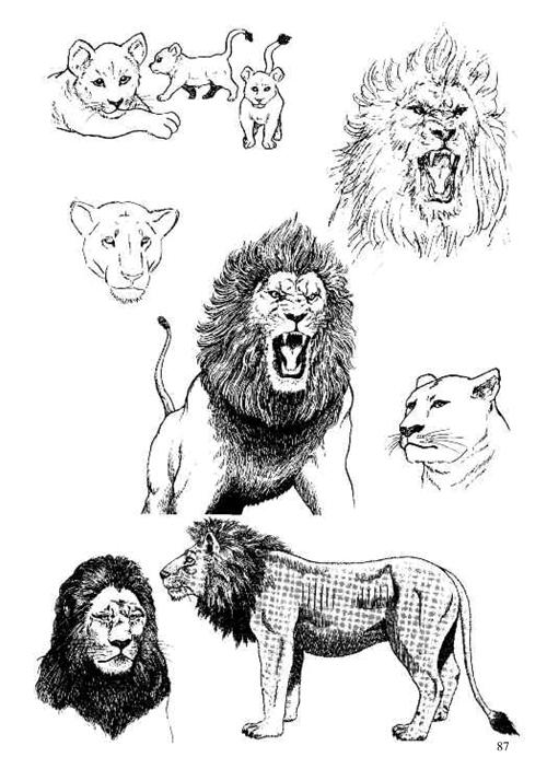 【th】日本漫画手绘技法经典教程11:动物的画法 (日)林晃,张宏飞 中国