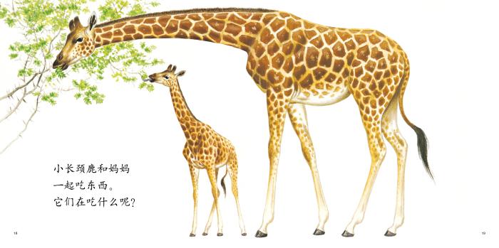 动物宝宝和妈妈(平装)(全七册)