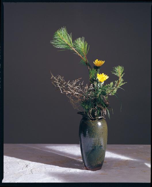 古典植物手绘图谱