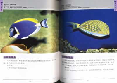 如倒立游走的刀片鱼(条纹鱼),画着脸谱的小丑鱼(双锯鱼),色彩艳丽的虾