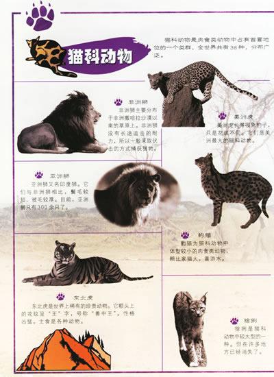 杂食性(人类,某此熊和其他一些杂食动物.).