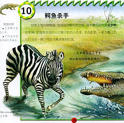 危险的野生爬行动物:鳄鱼价格