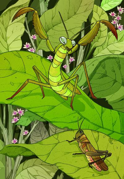 透过昆虫世界折射出了人类社会,折射出了人生.