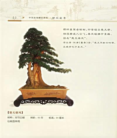 (三)湖北树木盆景的造型特点和艺术手法