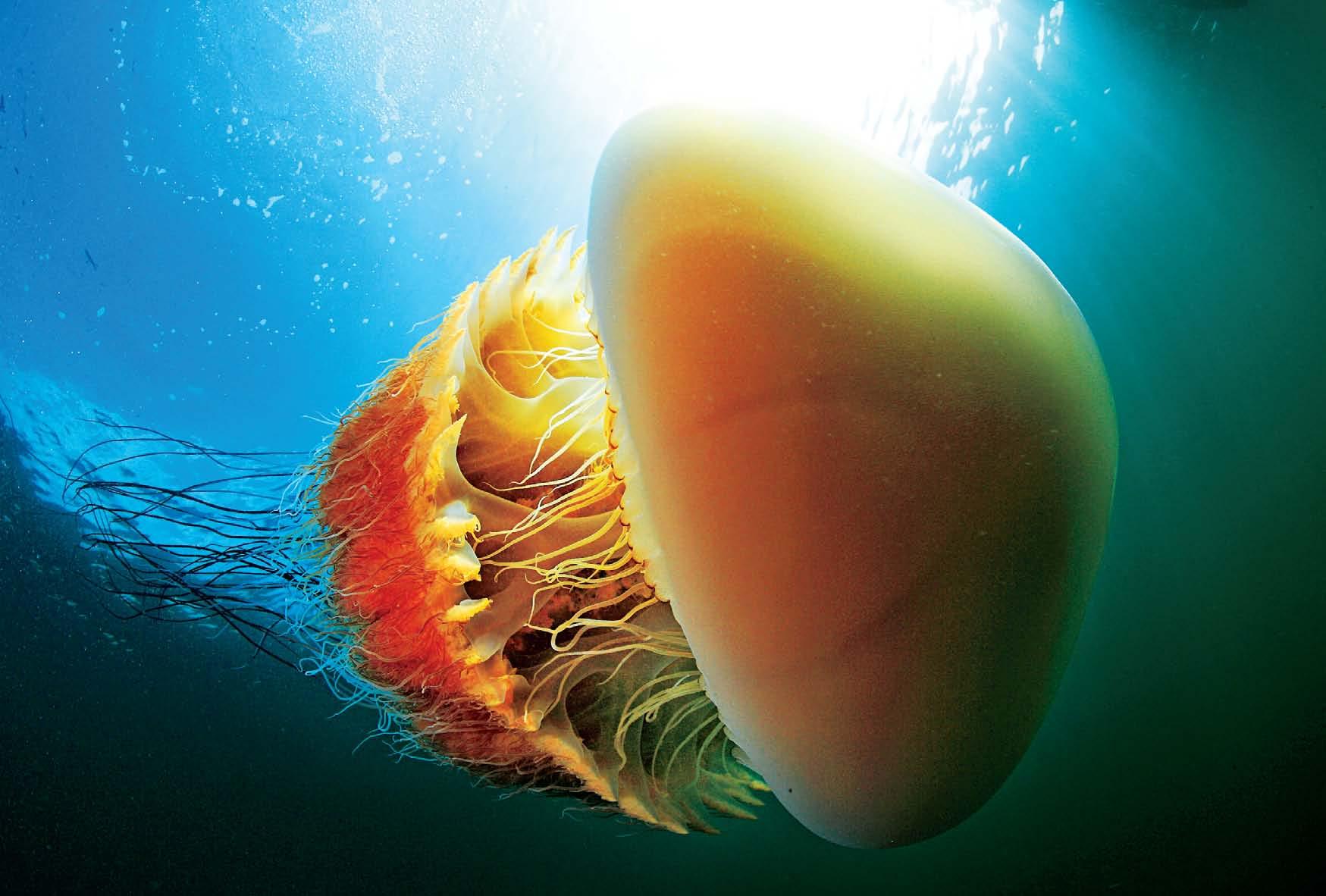 立体海洋动物折纸大全 图解