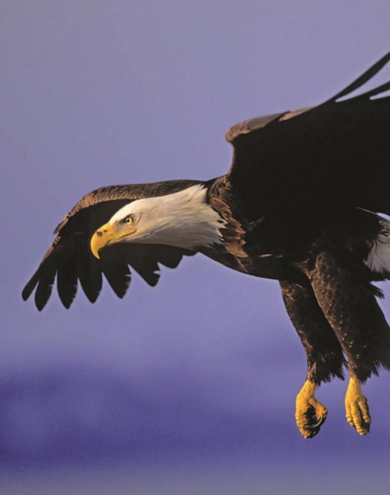 自由的发现——图解动物